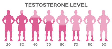 testosterone hormone level vector / man Vector Illustration