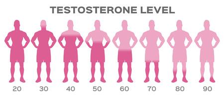 vector de nivel de hormona testosterona / hombre Ilustración de vector