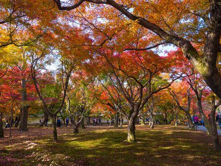 KYOTO - 27 Nov 2018:  Tofukuji Temple,  maple leaf festival in Kyoto, Japan