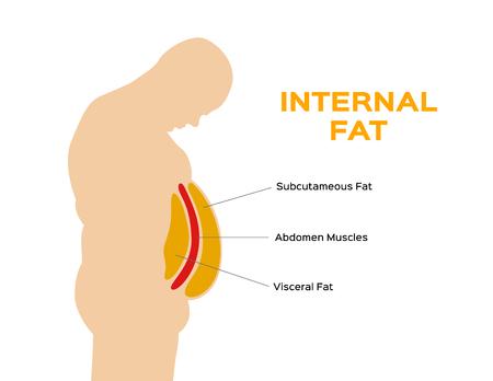 vettore dello strato di grasso della pancia e dell'addome umano / grasso sottocutaneo e viscerale