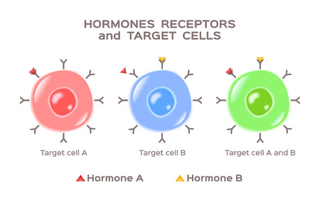 hormones, receptors and target cells vector