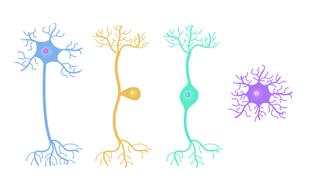 Vecteur de cellules neuronales