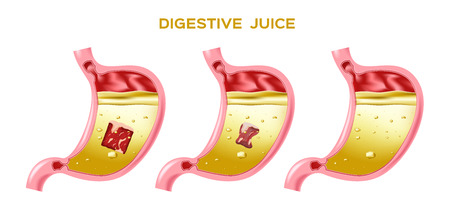 digestive juice vector / enzyme / stomach