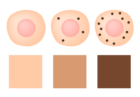 melanin in cell and skin color vector . protect white skin