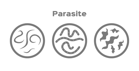 parasite in human icon Illustration