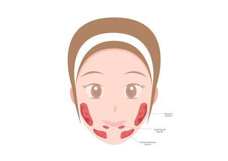 Glandes salivaires, glandes sublinguales, sous-maxillaires et parotides Vecteurs