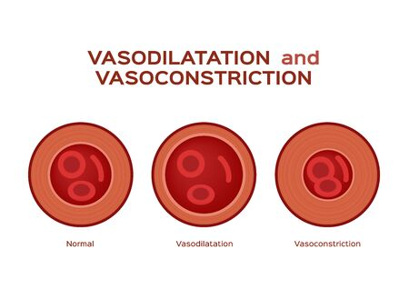 normal vasodilation and vasoconstriction blood vessel vector