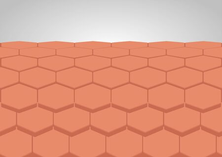 human skin layer vector
