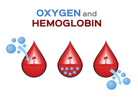 oxygen and red blood cell, gas exchange in hemoglobin vector  anatomy concept