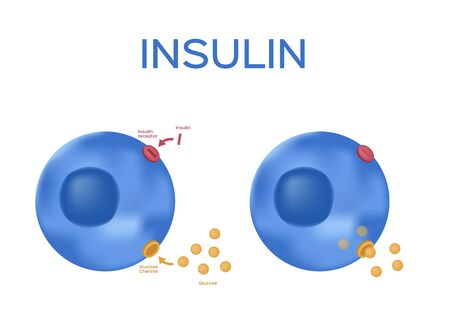 Insulin unlocks the cells glucose channel vector  pancreas and blood vessel