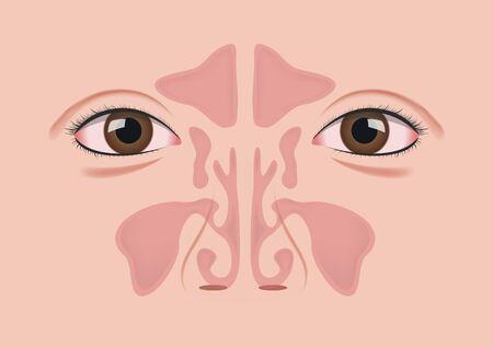 nasal sinus vector
