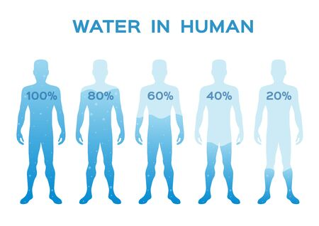 water level level,in the human body vector / infographic