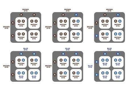 genetic eye color vector / blue and brown / inheritance Иллюстрация