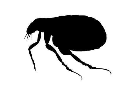 flea icon on white background / vector