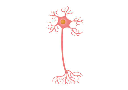 Neuron cell vectoron white