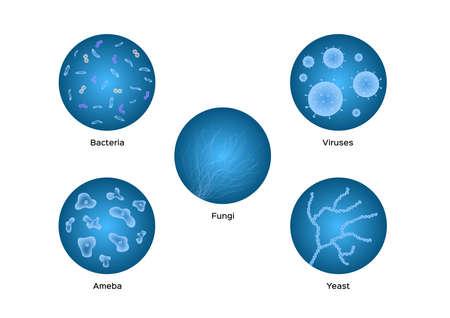 bacteria viruses ameba yeast icon vector on white