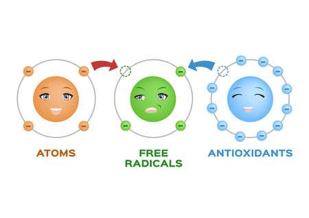 free radical and Antioxidant . Antioxidant donates electron to Free radical . infographic cartoon on white
