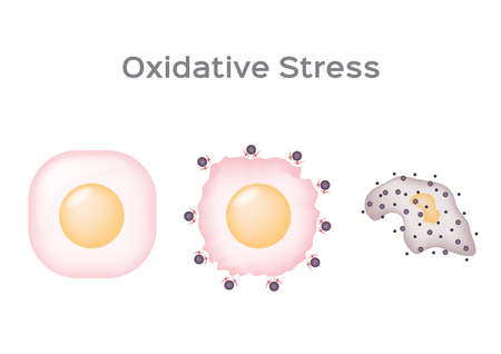 Oxidative Stress cell vector / free radical on white .