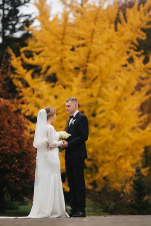 Beautiful autumn in the park. Just married couple wakling by the big yellow tree