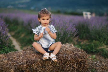 Adorable little girl sits on hay by the farm. Background of summer lavender field. Cute girl in striped t-shirt and blue shorts