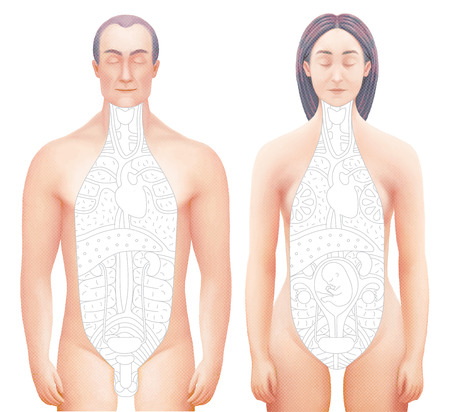 Vector illustration of sected bodies of man and woman with drawn outlined inner organs