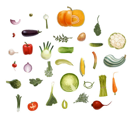 marrow: Hand-drawn vector vegetables, isolated on transparent background - tomato, spinach, vegetable marrow, corn, rosemary, green peas and beet olive eggplant salad onion leek, potato, carrot and so on Illustration