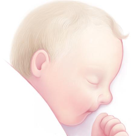 newborn baby: The illustration of sleeping newborn baby