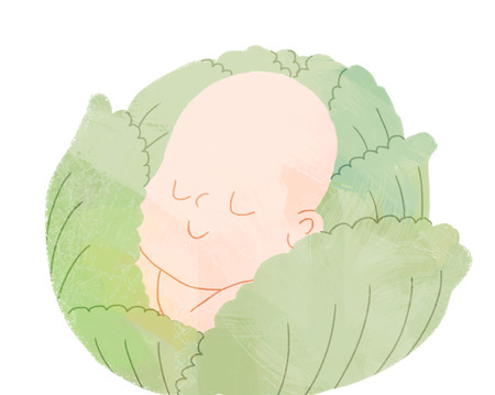 The illustration of a baby sleeping in the head of cabbage, a metaphor of conception and pregnancy