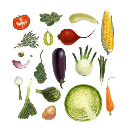 t bulb: Hand-drawn vegetables, isolated on transparent background: tomato, spinach, vegetable marrow, corn, rosemary, green peas, beet, olive, artichoke, eggplant, salad, fennel, onion, leek, potato, carrot, cabbage Stock Photo