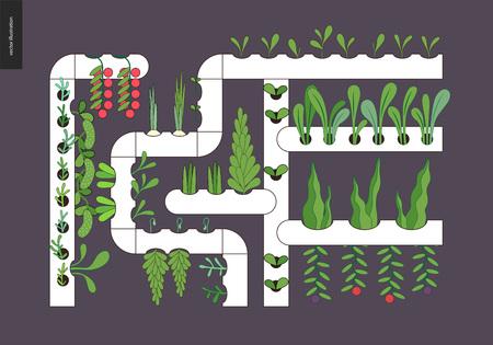 都市農業、ガーデニングや農業。水耕栽培 - 連続流溶液培養 - 栄養膜技術。土壌のない成長システム。