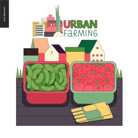 Urban farming, gardening or agriculture, harvest. Two containers filled with cucumbers and tomatoes standing on the deck and gauntlets, with town houses on the background farming icon.