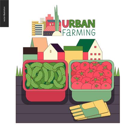 Urbane Landwirtschaft, Gartenarbeit oder Landwirtschaft, Ernte. Zwei Behälter füllten mit den Gurken und Tomaten, die auf der Plattform und den Handschuhen, mit Stadthäusern auf der Hintergrundlandwirtschaftsikone stehen.