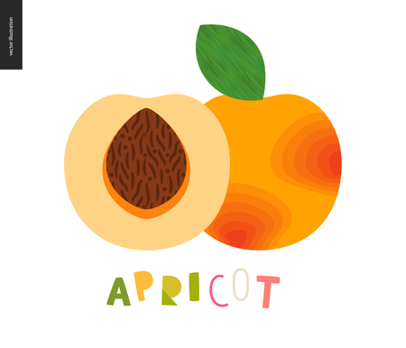 Food patterns - fruit, vector flat illustration of apricot - simple half of an apricot fruit full of firm yellow pulp, orange rind, brown seed, and lettering. Perfect for t-shirt, bag, decoration Illustration