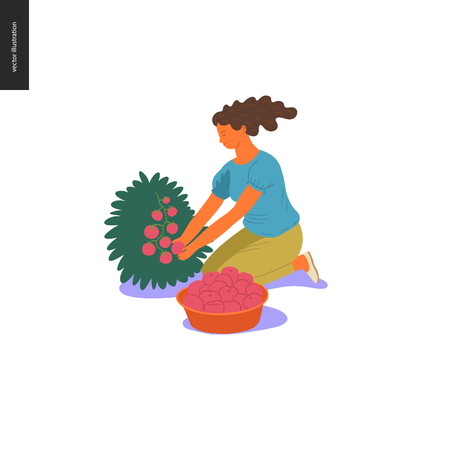 Harvesting people - vector flat hand drawn illustration of a young woman sitting on the ground squatting and collecting cherry tomatoes from the bush. Self-sufficiency, farming and harvesting concept Vettoriali