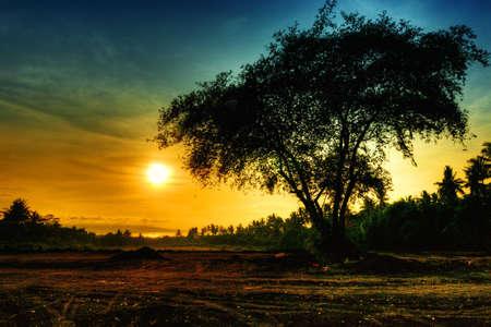 savana: lonely tree