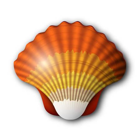 대양의: Vector illustration of Scallop seashell.