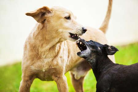 dogs playing: Perros jugando y disfrutando exterior.