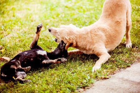 perros jugando: Perros jugando y disfrutando exterior.
