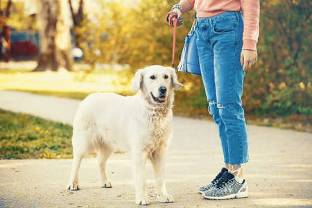 Young blonde woman is relaxing in the park with her retriever. Stock Photo