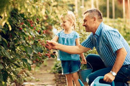 祖父は孫娘にブラックベリーを持ち直しています。 写真素材 - 84968927