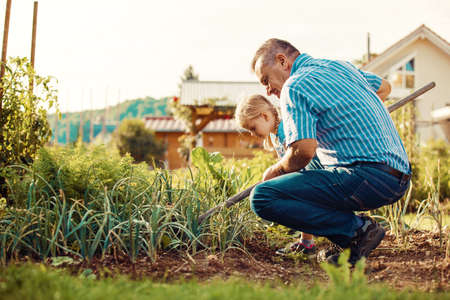 Grandfather is hoeing garden with his granddaughter. Stock Photo