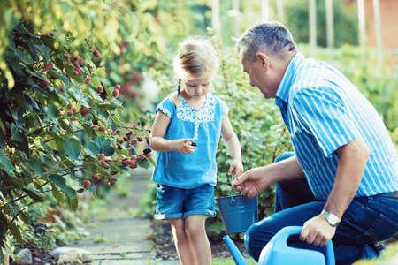 Kleindochter neemt braambes met haar grootvader in de tuin op. Stockfoto
