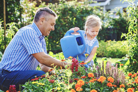 祖父は孫娘と花に水をやっている。 写真素材
