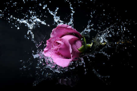 Lavanda rosa splash Archivio Fotografico - 3018033