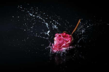 pink rose splash