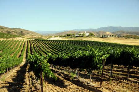 barossa: vineyard Stock Photo
