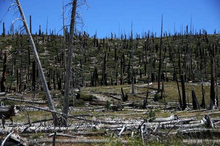 careless: burnt forest