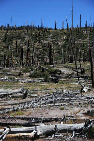 careless: dead forest