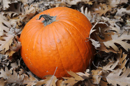 pumpkin and leaves Stock Photo