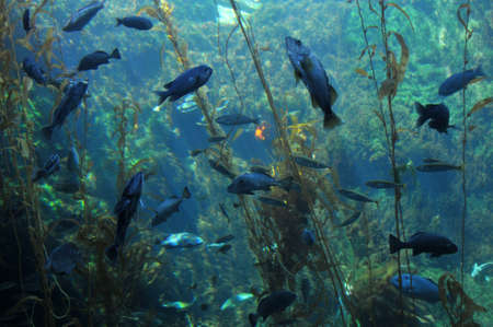 coral colored: undersea
